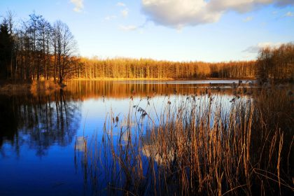 Fotografia przyrodnicza- kwarantanna-marzec 2020
